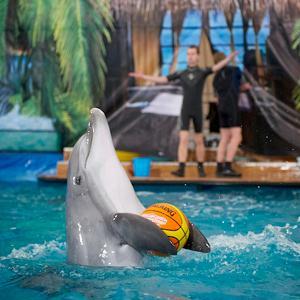 Дельфинарии, океанариумы Фурманова