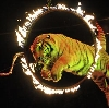 Цирки в Фурманове
