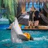 Дельфинарии, океанариумы в Фурманове