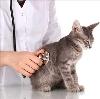Ветеринарные клиники в Фурманове